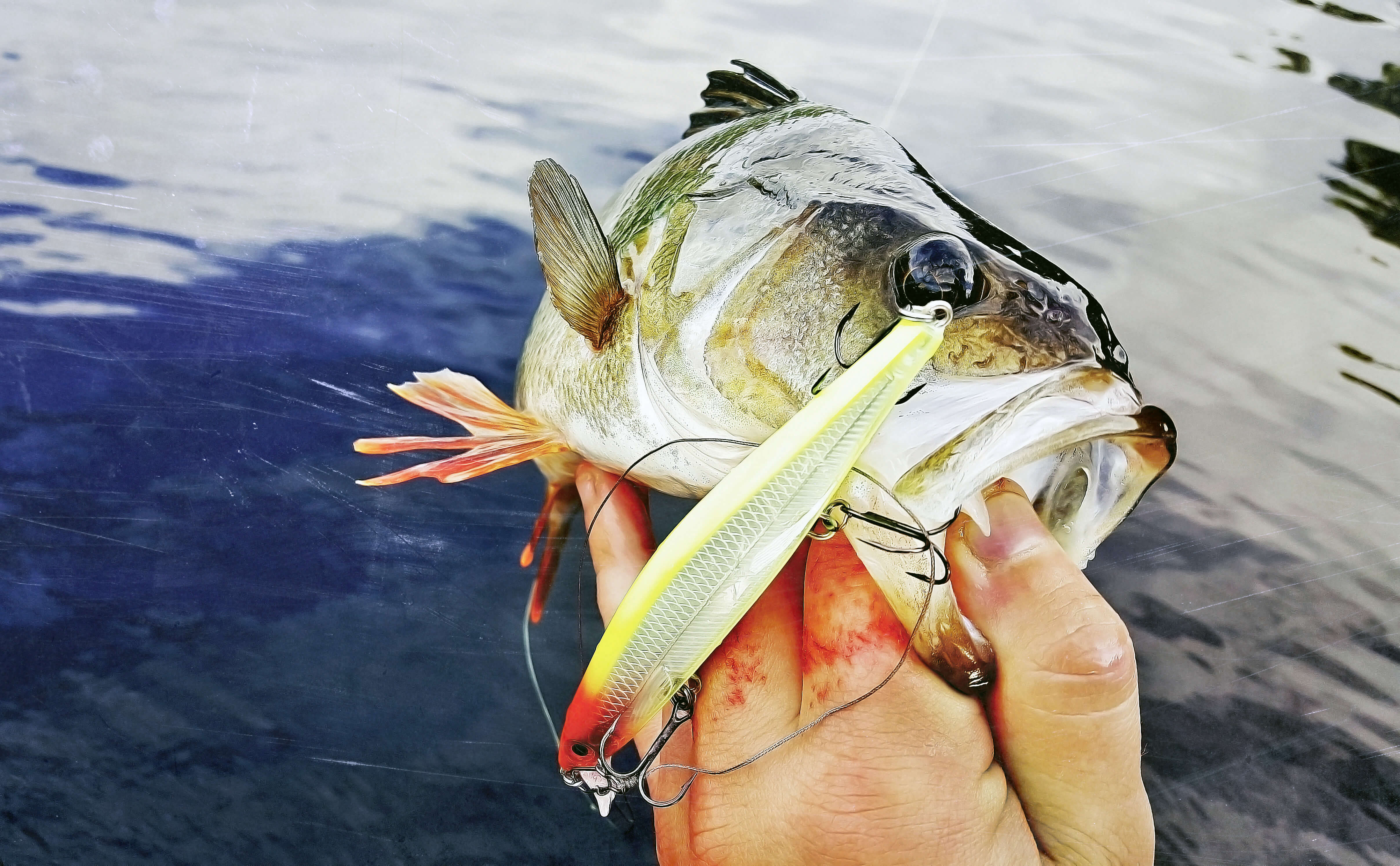 Shallow Water Perch Tactics!