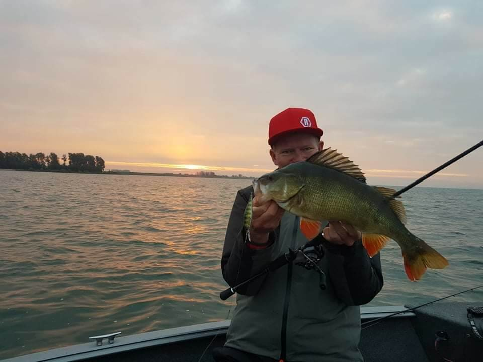 Targeting Perch Throughout The Year (and where to find them)