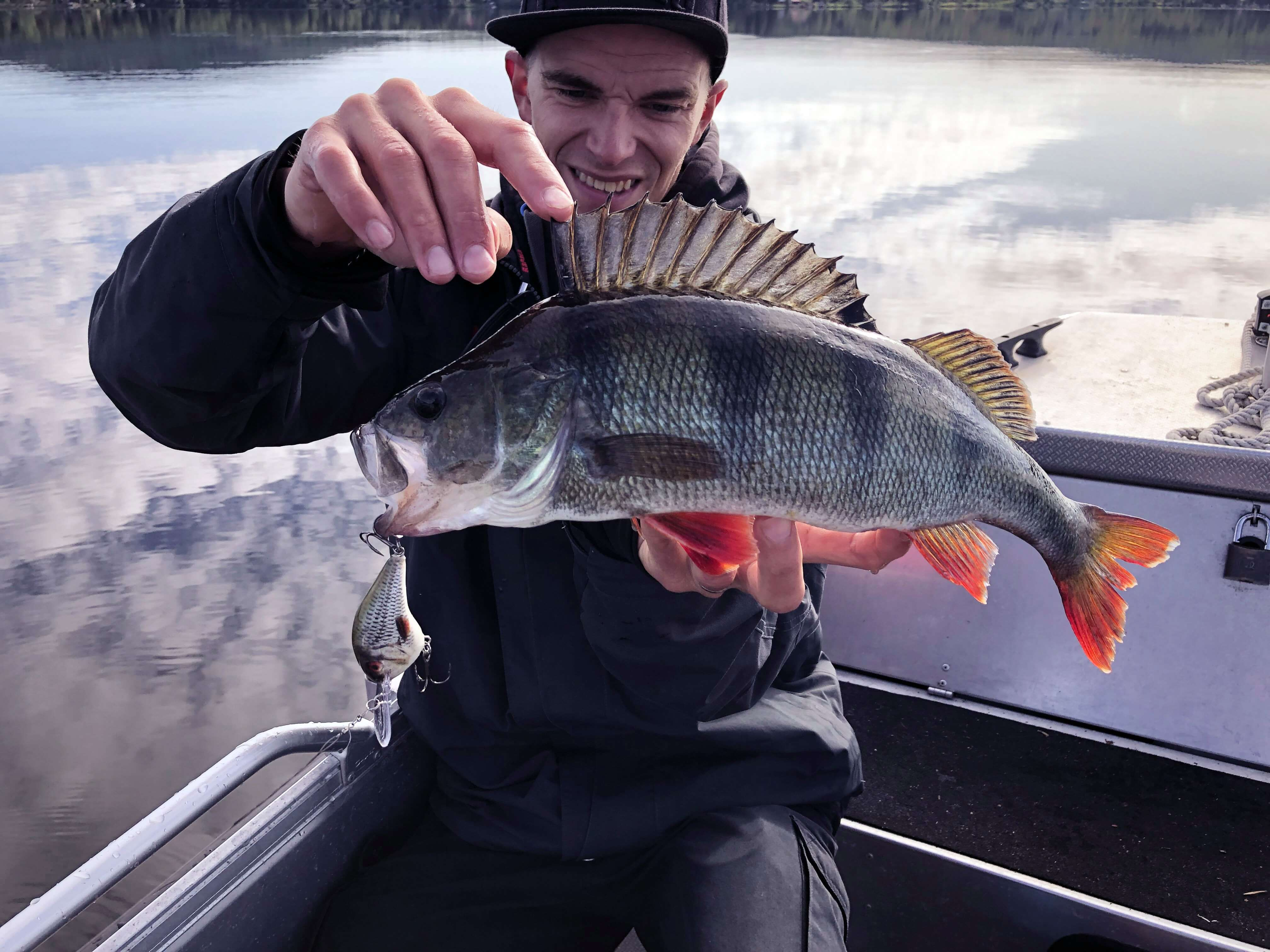 Supersize perch on Shadow Rap Shad Deep!